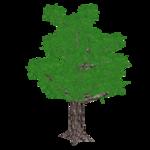 Daimyo Oak (Fauna)