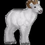 Dall Sheep (Santi195)