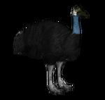 Dwarf Cassowary (Budgielover101, Jannick & Penguinman)