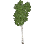 Trembling Aspen Tree (Demon Hunter)