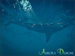 Great White Shark (Aurora Designs)