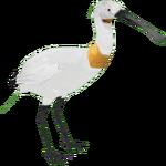 Eurasian Spoonbill (DutchDesigns)