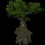 White Mangrove (Demon Hunter)