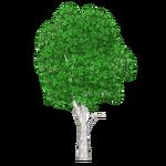 Sweet Myrtle Tree (Tamara Henson)
