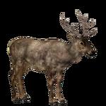 Elk (Titan)