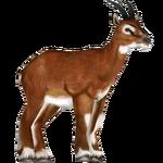 Bates' Pygmy Antelope (Tamara Henson)/Version 1