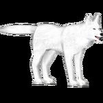 Arctic Wolf (The Restorers)
