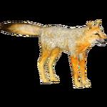 Cape Fox (Tamara Henson)/Version 1