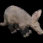 Aardvark (Aurora Designs)