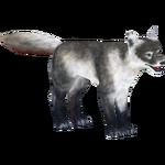 Arctic Fox (Holden)