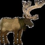 Elk (Zoo Admin Design Team)