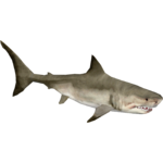 Great White Shark (Zerosvalmont)/Version 1