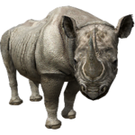 Black Rhinoceros (Aurora Designs)