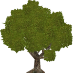 English Oak (HENDRIX)