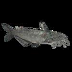 Blue Catfish (Crookedjaw)