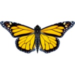 Ambient Giant Monarch Butterfly (Jntg4 & Mjmannella)