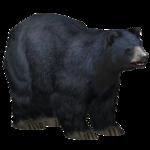 Black Bear (Super Designers United)