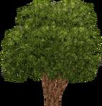 Conkerberry (Aurora Designs)