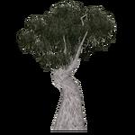 Snow Gum Tree (Tamara Henson)