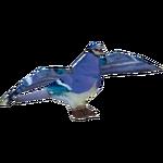 Ambient Blue Jay (Csleesburg)
