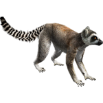 Ring-tailed Lemur (Aurora Designs)