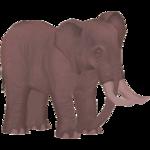 African Forest Elephant (Elephantium Creators Realm)