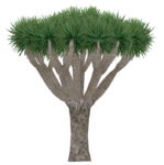 Dragon Tree (Aurora Designs)