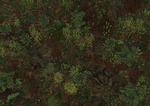 Asian Mixed Forest (Fauna)