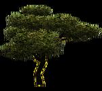 Chilean Mesquite (Aurora Designs)