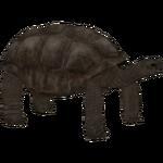Aldabra Giant Tortoise (Ulquiorra)