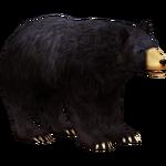 American Black Bear (The Restorers)