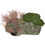Animated Coral Reef 2 (Zerosvalmont)