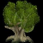 White Mangrove (Artifex)