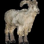 Bilberry Goat (Tamara Henson)