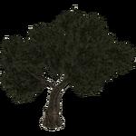 Olive (Hispa Designs)