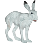 Arctic Hare (Tamara Henson)