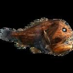 Common Fangtooth (Whalebite)