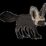 Bat-Eared Fox (Gloria)