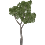 Daisy Tree (Aurora Designs)