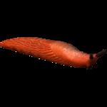 European Red Slug (Serpy)
