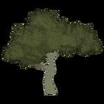 Island Oak (Artifex)