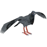 African Owl Pigeon (Tamara Henson)