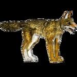 Coyote (Tamara Henson)