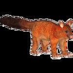 Coppery Brushtail Possum (Tamara Henson)