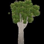 Cabbage Tree (Worldwide Designers United)
