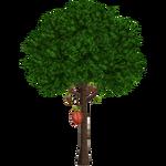 Cocoa Tree (Realy)