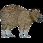 Capybara (Braq & Xtremepieman)