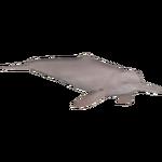 Amazon River Dolphin (Jannick)