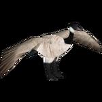 Canada Goose (VGnome)