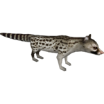 European Genet (HENDRIX)/Version 1